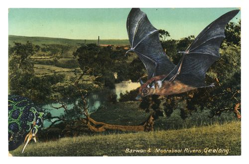 Graciahaby_geelongpostcardcollage12