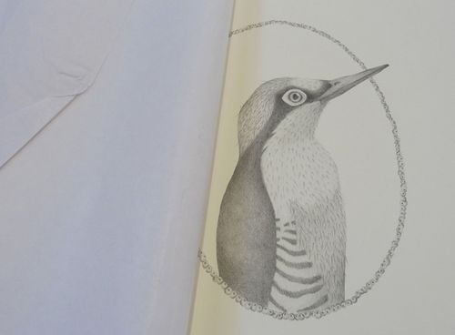 Gracialouise_yearofbirds02