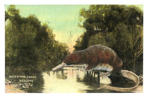 Graciahaby_geelongpostcardcollage11