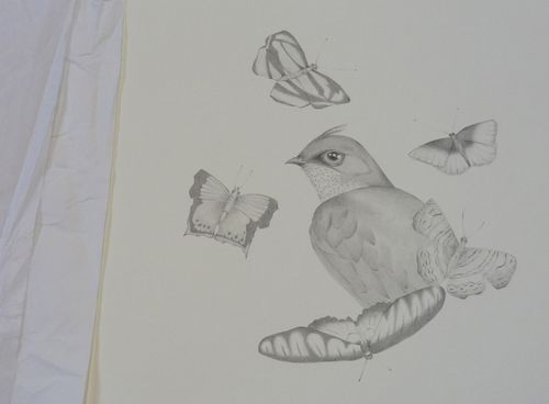 Gracialouise_yearofbirds30