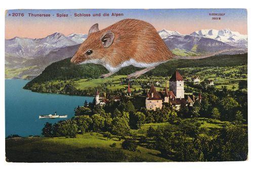 GraciaHaby_postcardcollage2013_09