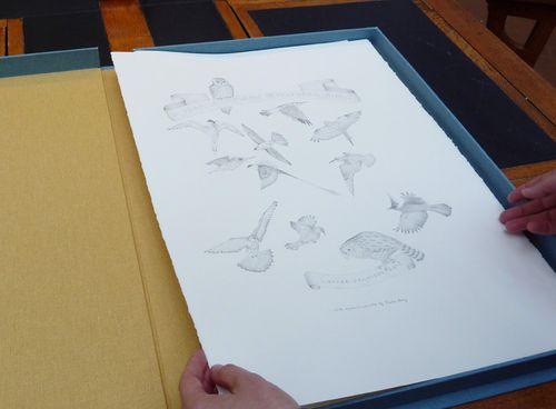 Gracialouise_birds12