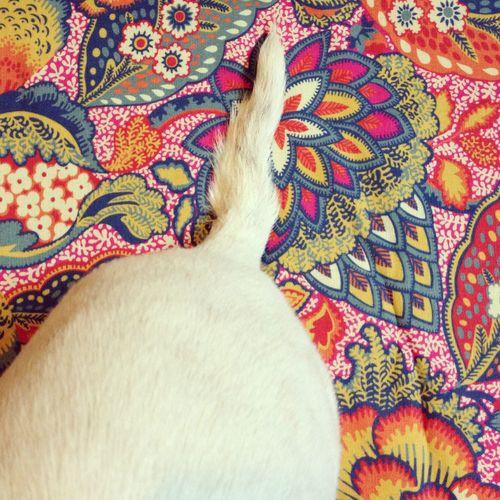 Gracialouise_patricia_upholstery