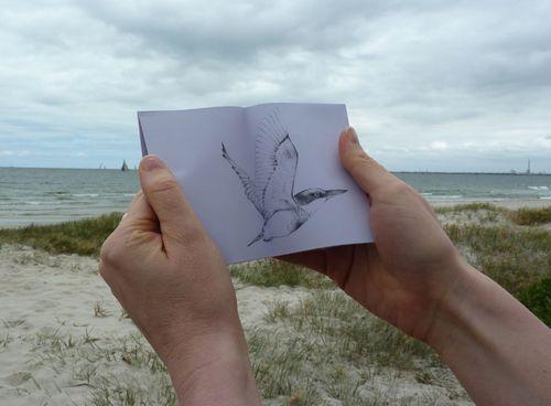 Gracialouise_seaside_birds07