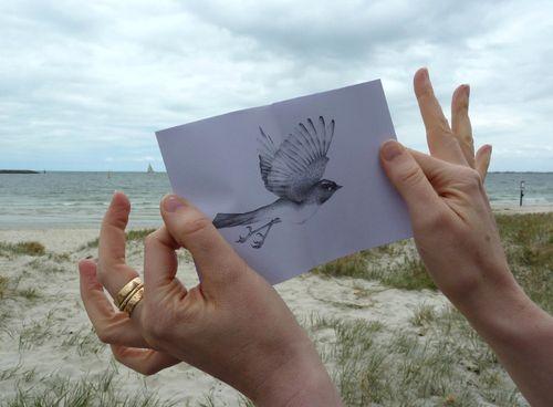 Gracialouise_seaside_birds05