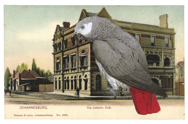 Gracialouise_postcardcollage_greyparrot