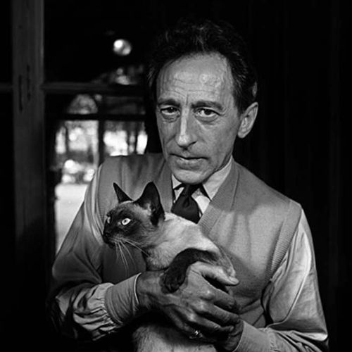 Cocteau_Brown_Cat