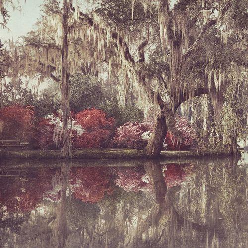 Gracialouise_magnolia_reflection