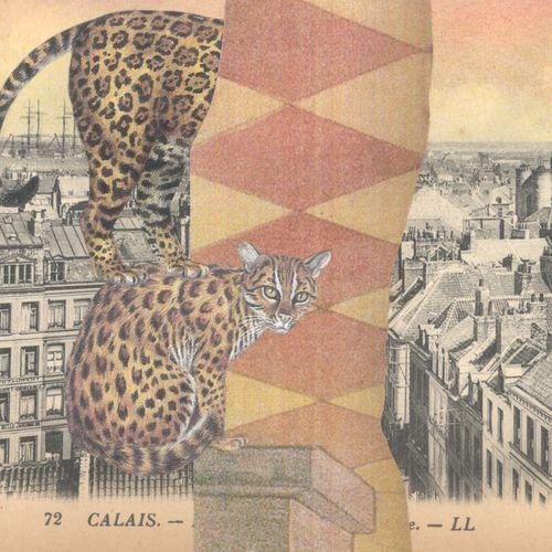 Gracialouise_cat_collage