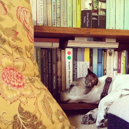 Gracia_louise_percy_bookshelves