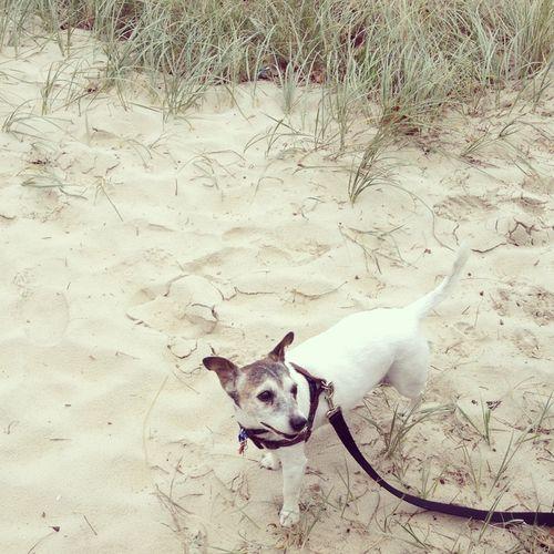 Gracialouise_percy_beach