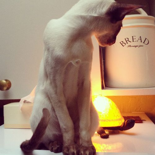 Gracialouise_omar_lamp