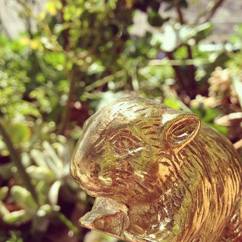Gracialouise_gold_wombat
