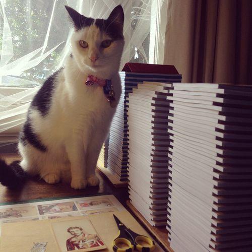 Gracialouise_Olive_studiocat