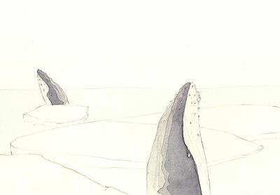 Humpback_whale_3