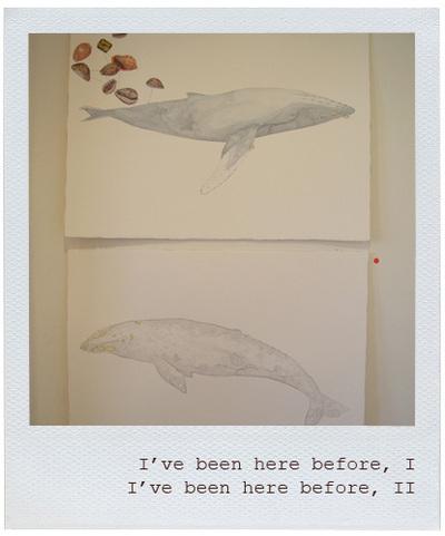 Whales_gracialouise1_2