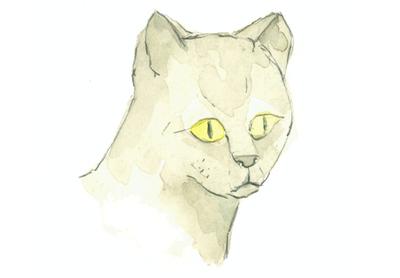 Louise_jennison_cats2