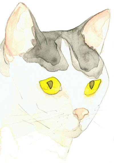 Louise_jennison_cats4