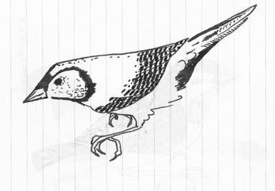 Louise_jennison_bird2