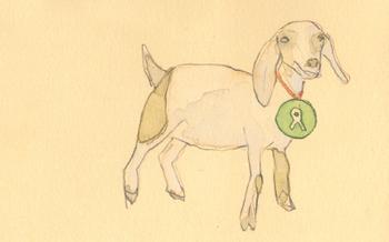 Christmas_oxfam_goat