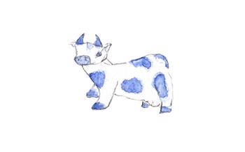 Hickory_cow_1
