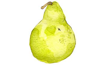 Hickory_pear