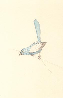 Louise_jennison_bird11