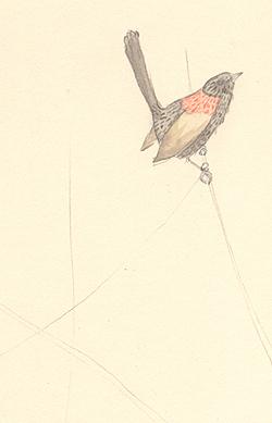 Louise_jennison_bird12
