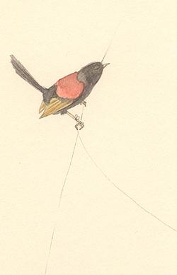 Louise_jennison_bird13