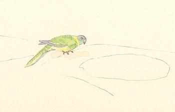 Louise_jennison_bird3