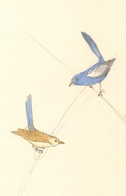 Louise_jennison_bird5