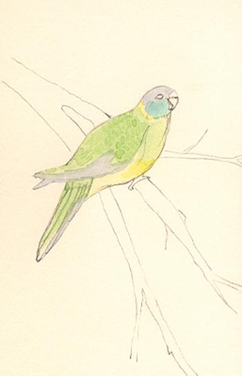 Louise_jennison_bird6