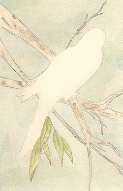 Louise_jennison_bird7