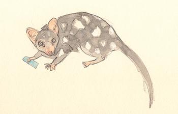 Louise_jennison_marsupial3