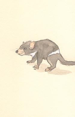 Louise_jennison_marsupial7