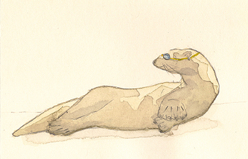 Otter_with_goggles_1