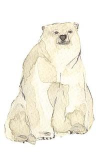 Polar_1_1