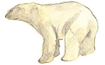 Polar_3
