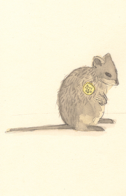 Quokka_with_badge_1