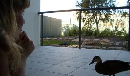 Waiting_duck4_2