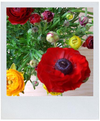 Polaroid_blooms1