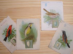 Bird_mail1