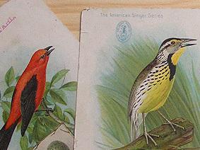 Bird_mail2