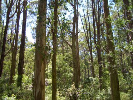Many_trees1