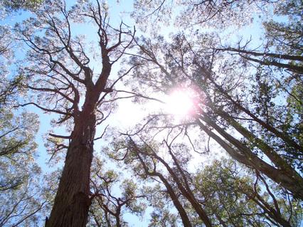 Many_trees2_4