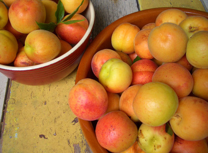 January_apricots1