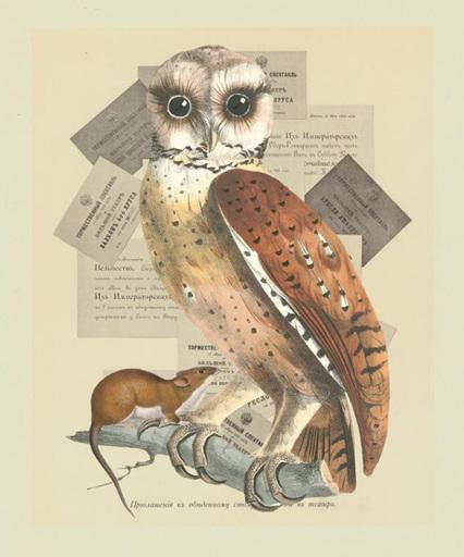 Gracia_owl_rodent