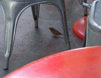 Wednesday_sparrow