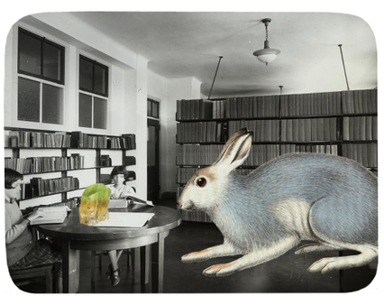 New_hare_1_2
