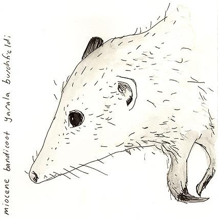 Animal_4